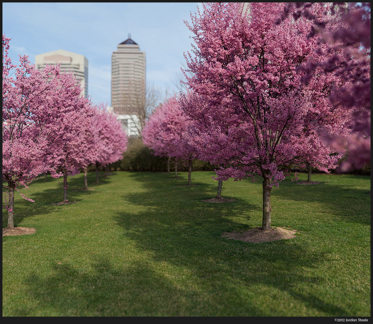 Blossoms in the City - 64 Image Stitch: Panasonic GH2 with Rokinon 85mm f/1.4, Click to enlarge!