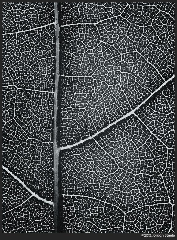 Maple Leaf - Olympus OM-D E-M5 with Leica 45mm f/2.8 Macro