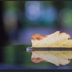 Reflected Leaf - Olympus OM-D E-M5 with Olympus 60mm f/2.8 Macro