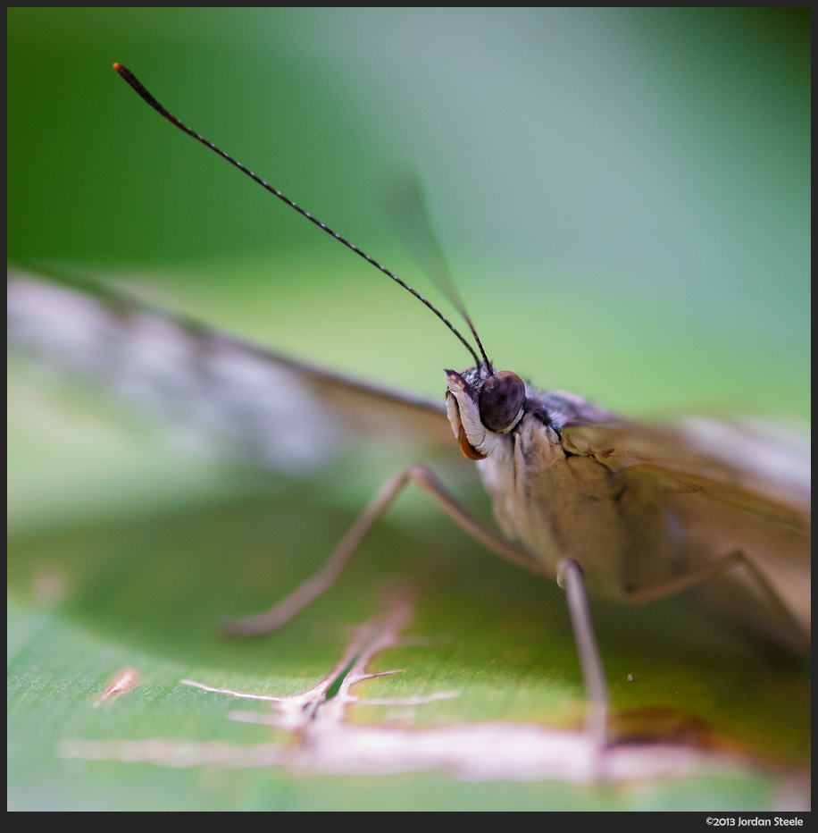 Butterfly - Fujifilm X-E1 with Fujinon 60mm f/2.4 Macro