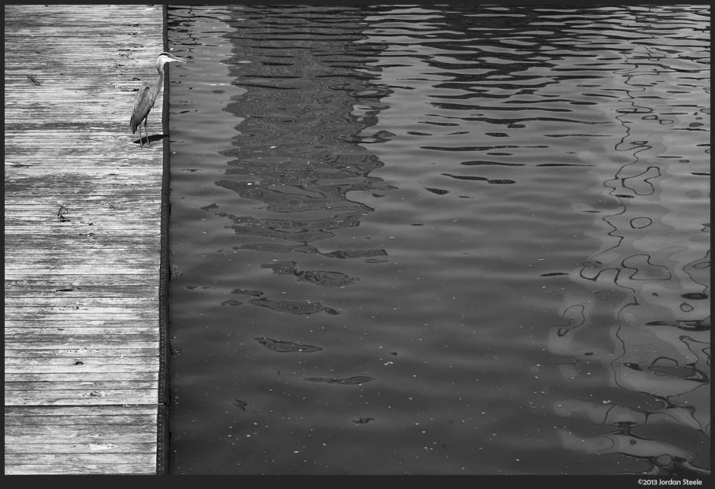 Great Blue Heron, Columbus, OH - Fujifilm X-E1 with Fujinon 60mm f/2.4 Macro