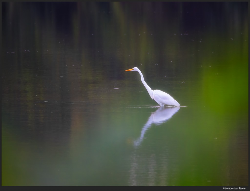 Egret in the Morning - Olympus OM-D E-M5 with Olympus 75-300mm f/4.8-6.7 II