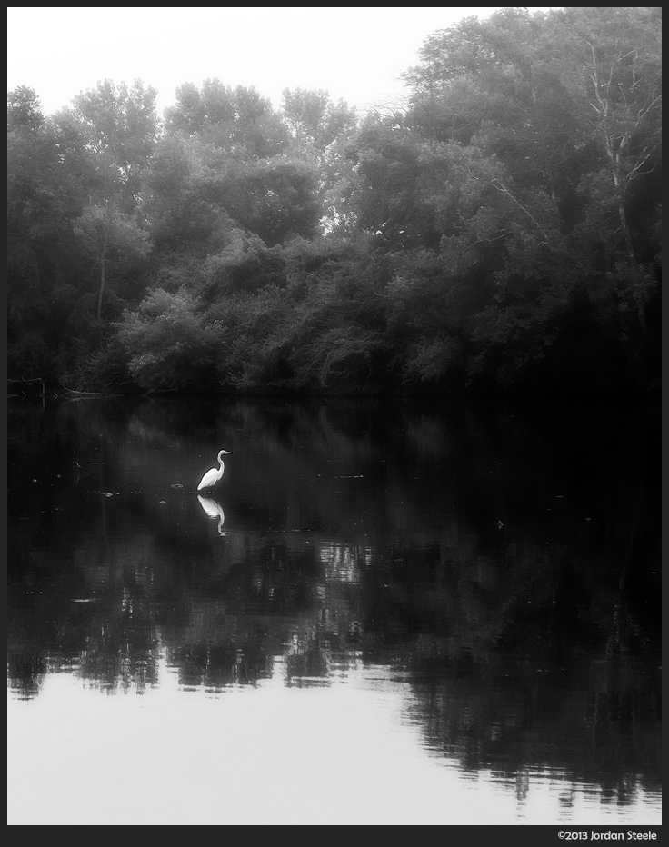 Egret in the Mist - Fujifilm X-M1 with Fujinon XC 16-50mm f/3.5-5.6 OIS