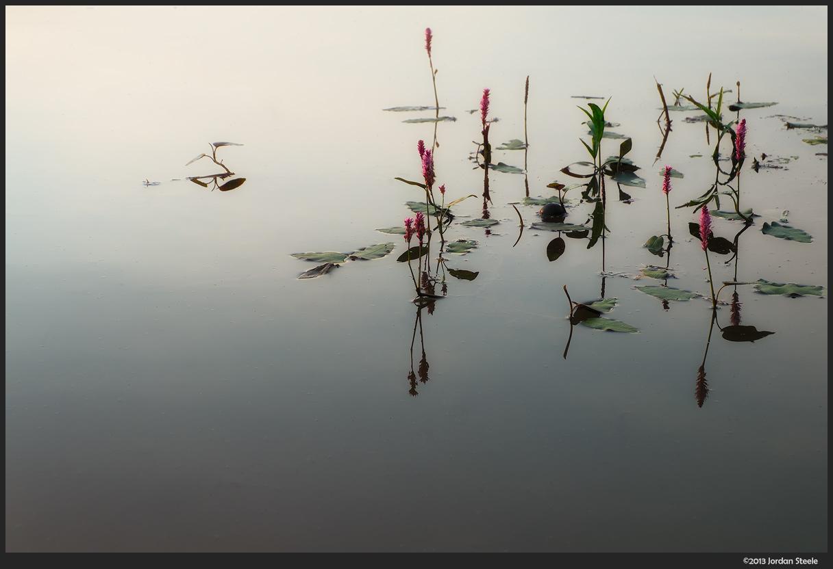 Water Plants - Fujifilm X-M1 with Fujinon XC 16-50mm f/3.5-5.6 OIS