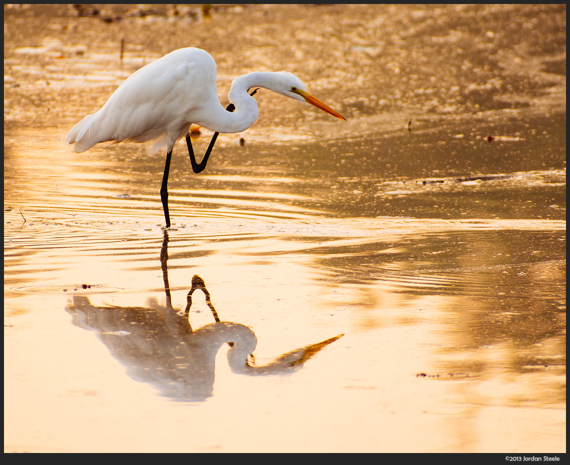 Egret at Sunrise - Olympus OM-D E-M5 with Canon FD 50-300mm f/4.5L