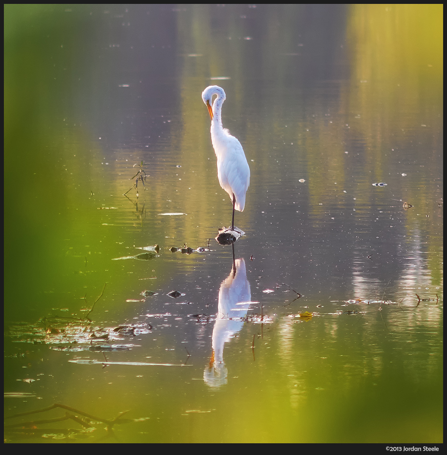 Egret - Fuji X-E1 with Olympus OM 200mm f/4