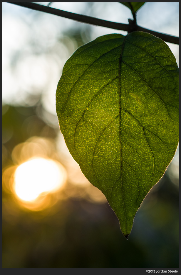 Leaf at Sunset - Fujifilm X-E2 with Fujinon XF 60mm f/2.4 @ ISO 800