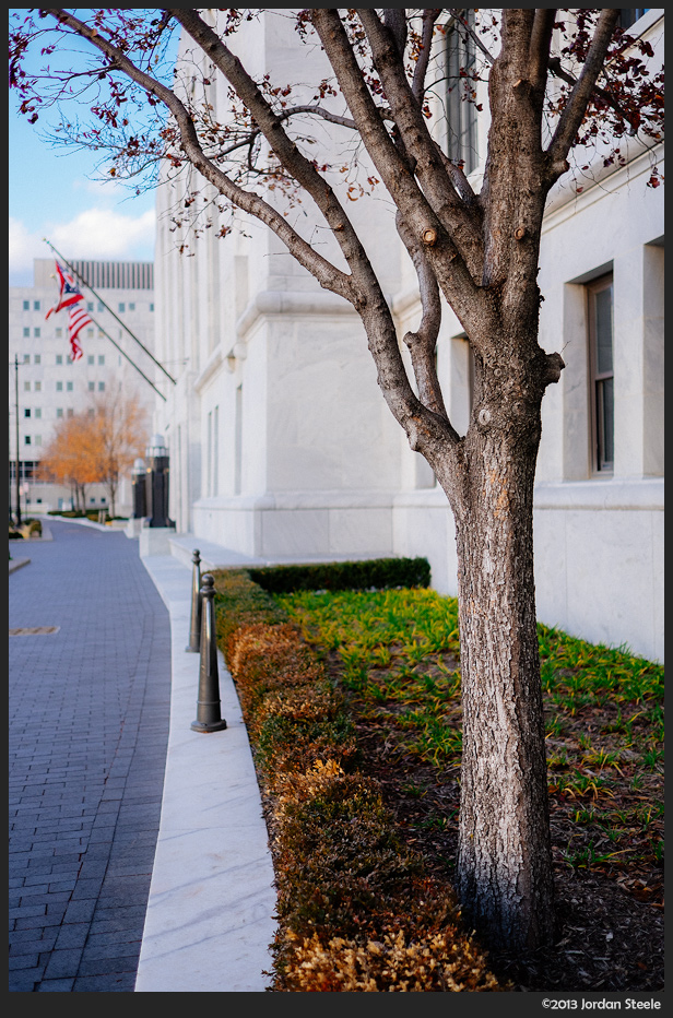 Tree at the Courthouse - Fujifilm X-E2 with Fujinon XF 23mm f/1.4 R @ ISO 200