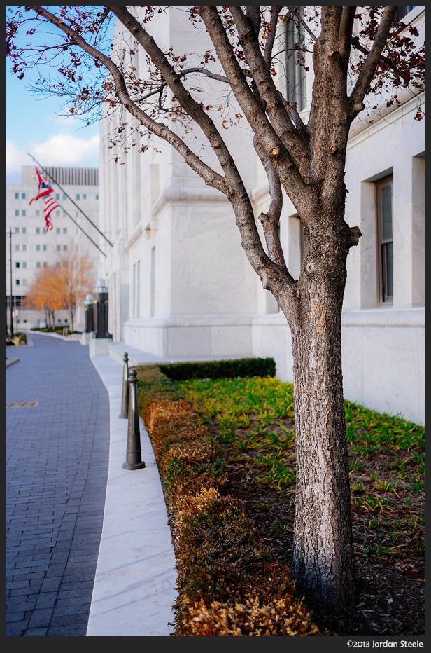 Tree at the Courthouse - Fujifilm X-E2 with Fujinon XF 23mm f/1.4 R @ f/1.4