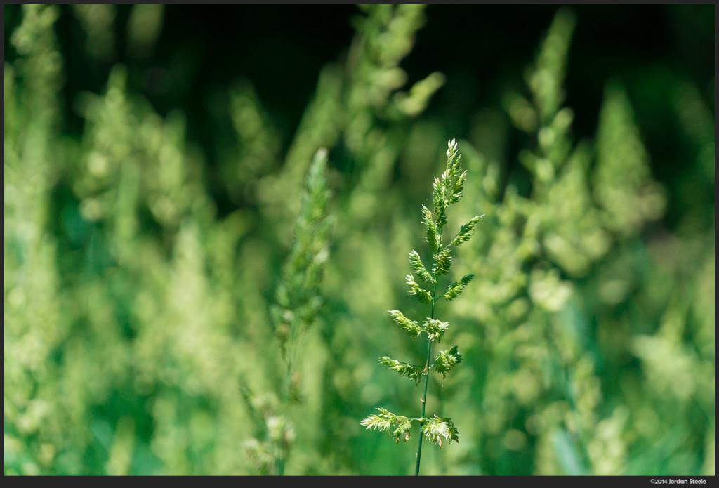 Grass - Sony NEX-6 with Sony 18-105mm f/4 G OSS @ 105mm, f/4, 1/800s
