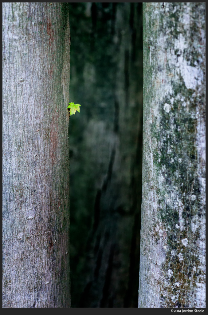 Tiny Leaf - Sony a6000 with Sigma 60mm f/2.8  DN Art @ f/2.8