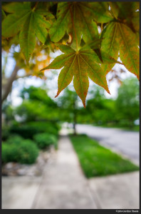 Buckeye Sidewalk - Sony a6000 with Rokinon 12mm f/2.0 @ f/2.0
