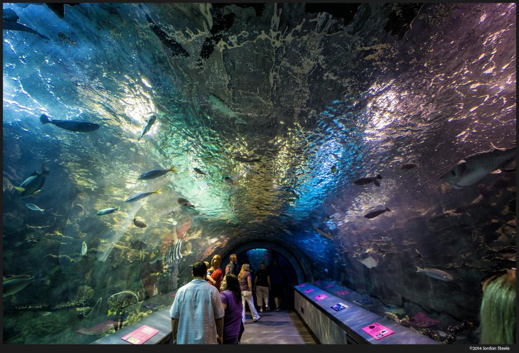 Tunnel - Newport Aquarium, Newport, KY  - Sony a6000 with Rokinon 12mm f/2.0 NCS CS