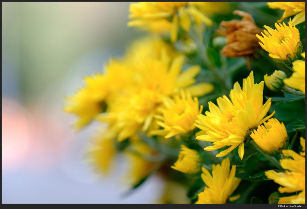 Flowers - Fujifilm X-T1 with Fujinon XF 18-135mm f/3.5-5.6 @ 135mm, f/5.6