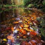 Autumn Stream - Sony a6000 with Rokinon 12mm f/2 @ f/16