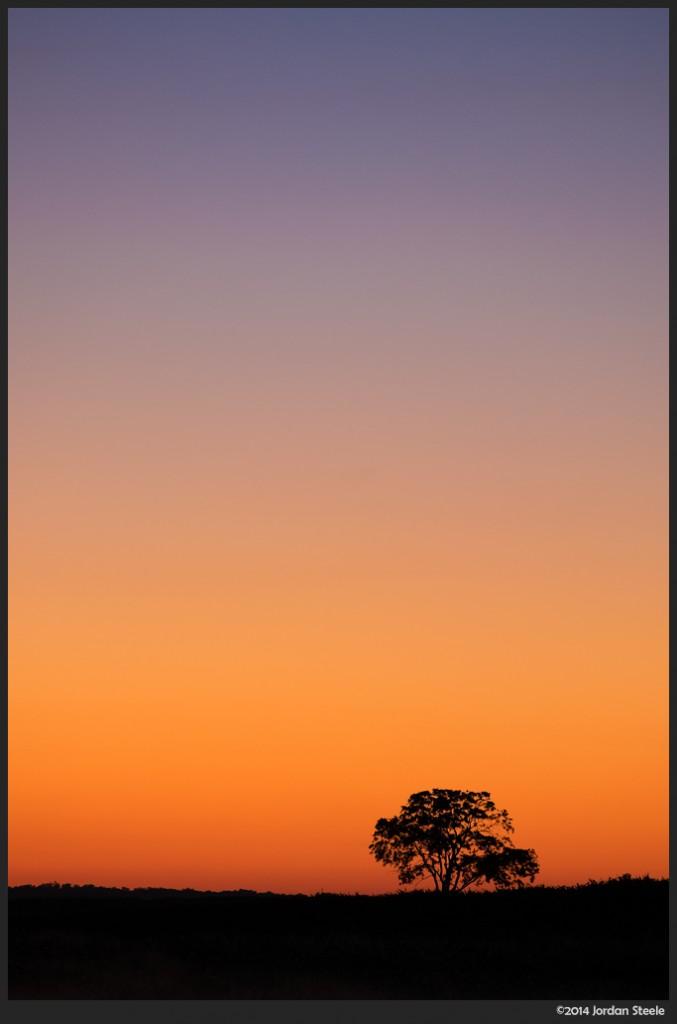 Tree at Sunrise - Fujifilm X-T1 with Fujinon XF 55-200mm f/3.5-4.8 @ 141mm, f/5, 1/25s, ISO 800