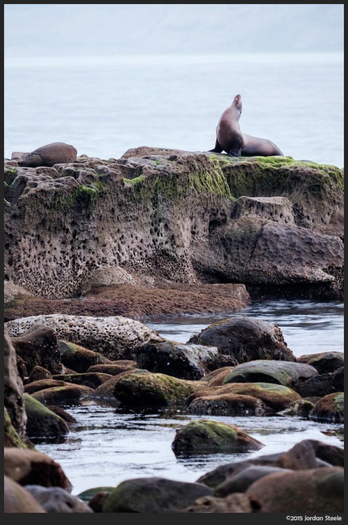 Sea Lion on the Rocks, La Jolla Cove Beach, La Jolla CA - Fujifilm X-T1 with Fujinon XF 55-200mm f/3.5-4.8 @ 200mm, f/4.8, 0.7s, ISO 1000