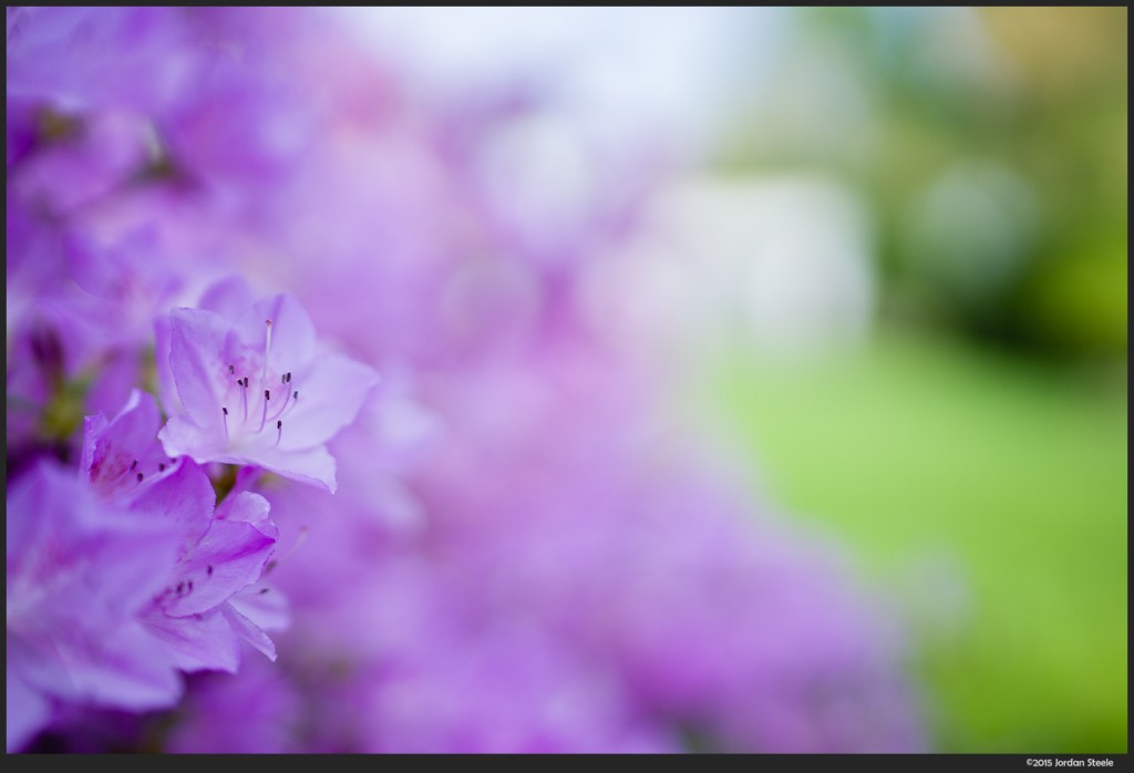Purple and Green - Zeiss Distagon 35mm f/1.4 ZA @ f/1.4