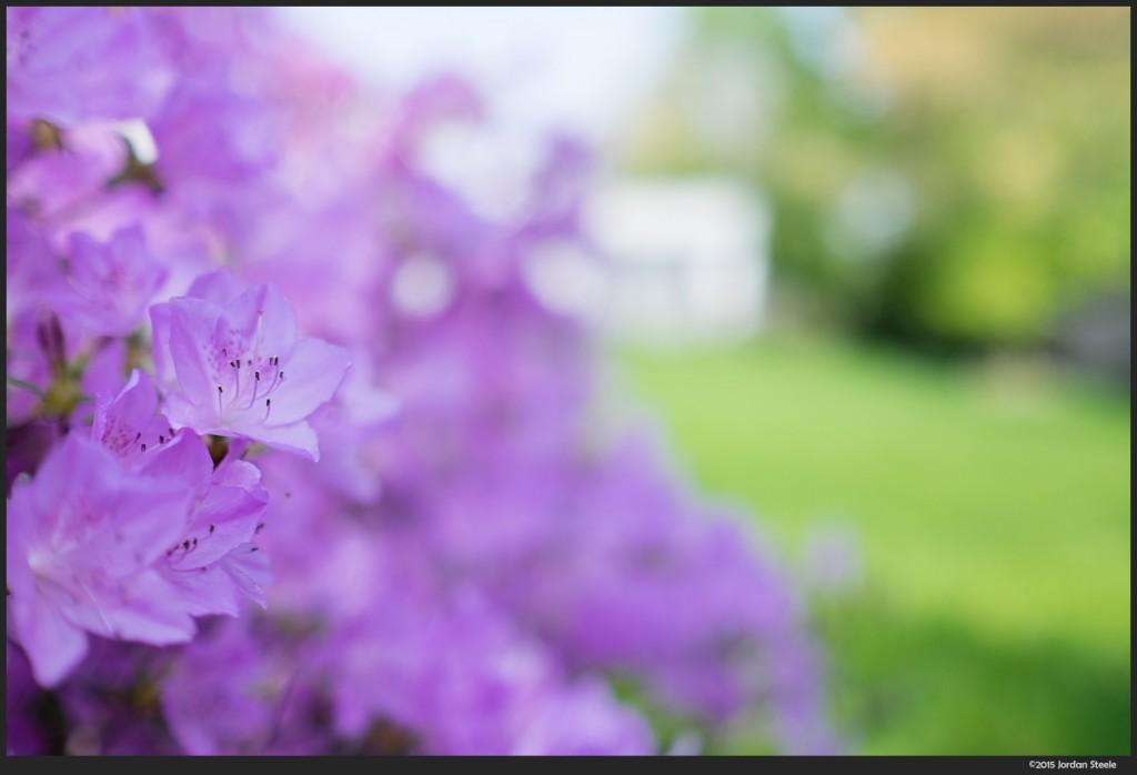 Purple and Green - Fujinon XF 23mm f/1.4 @ f/1.4