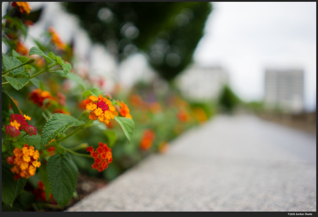 Flowers - Sony A7 II with Sony FE 28mm f/2 @ f/2
