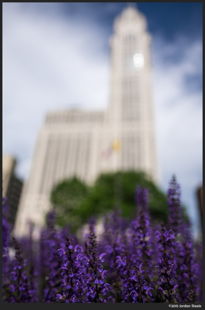 Flowers below the LeVeque Tower - Fujifilm X-T1 with Fujinon XF 16mm f/1.4 @ f/1.4