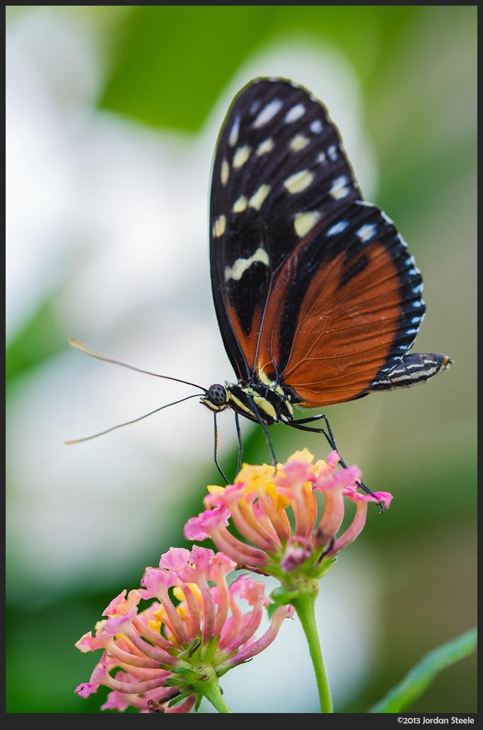 Butterfly - Fujifilm X-E1 with Fujinon XF 60mm f/2.4 R @ f/2.4