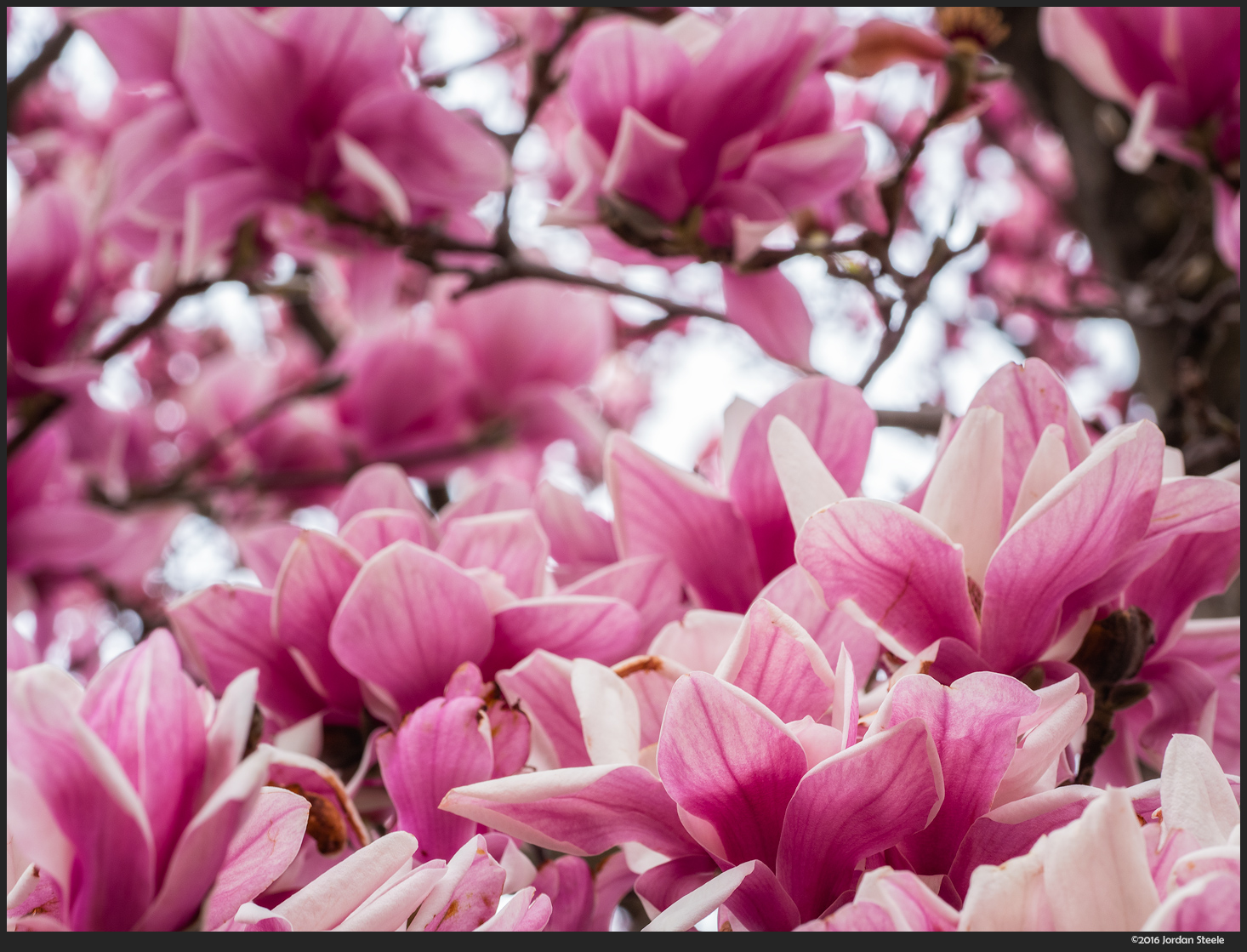 Magnolia - Olympus Pen-F with Olympus 60mm f/2.8 @