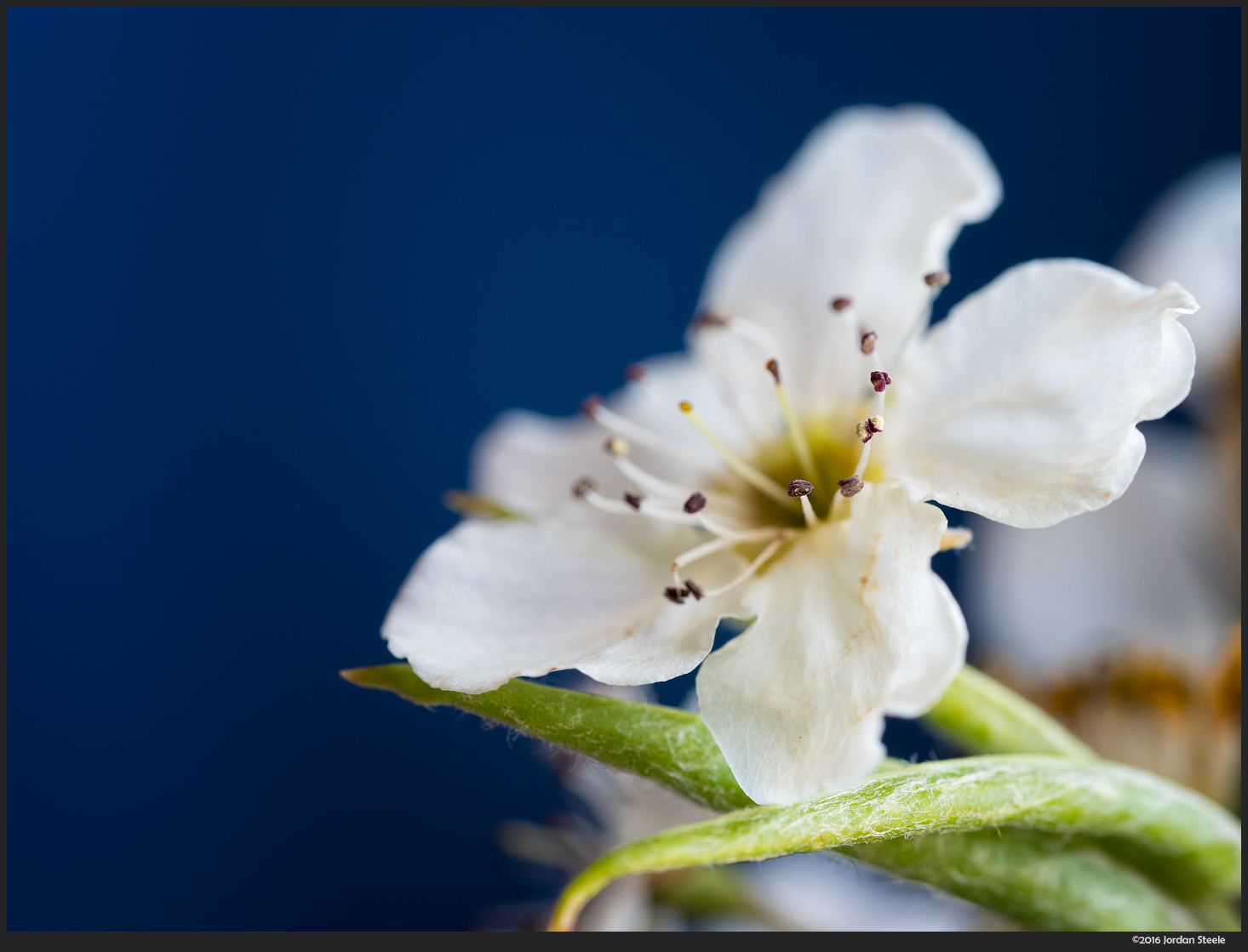 This photo of a blossom was taken at f/4, an optimal aperture for sharpness, but the final image has very shallow depth of field.