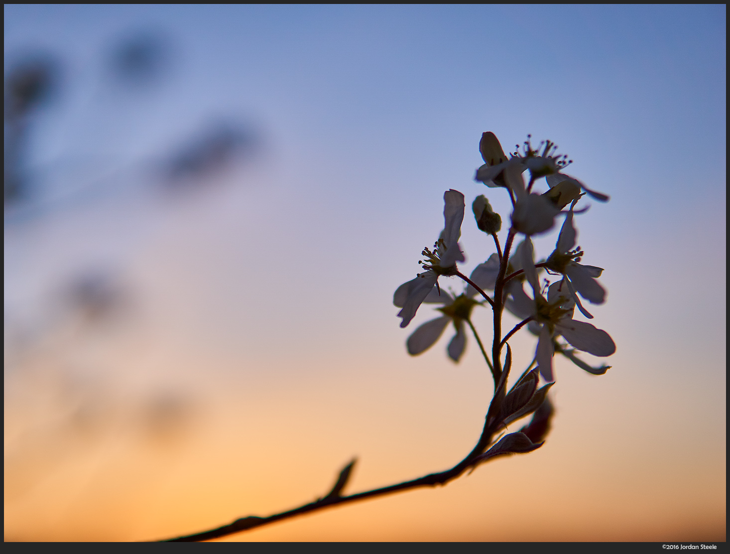 Blossoms at Sunset - Sony a6000 with Sigma 30mm f/1.4 DC DN @ f/1.7