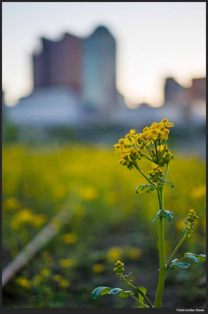 Flowers in the City - Sony A7 II with Sony FE 50mm f/1.8 @ f/1.8