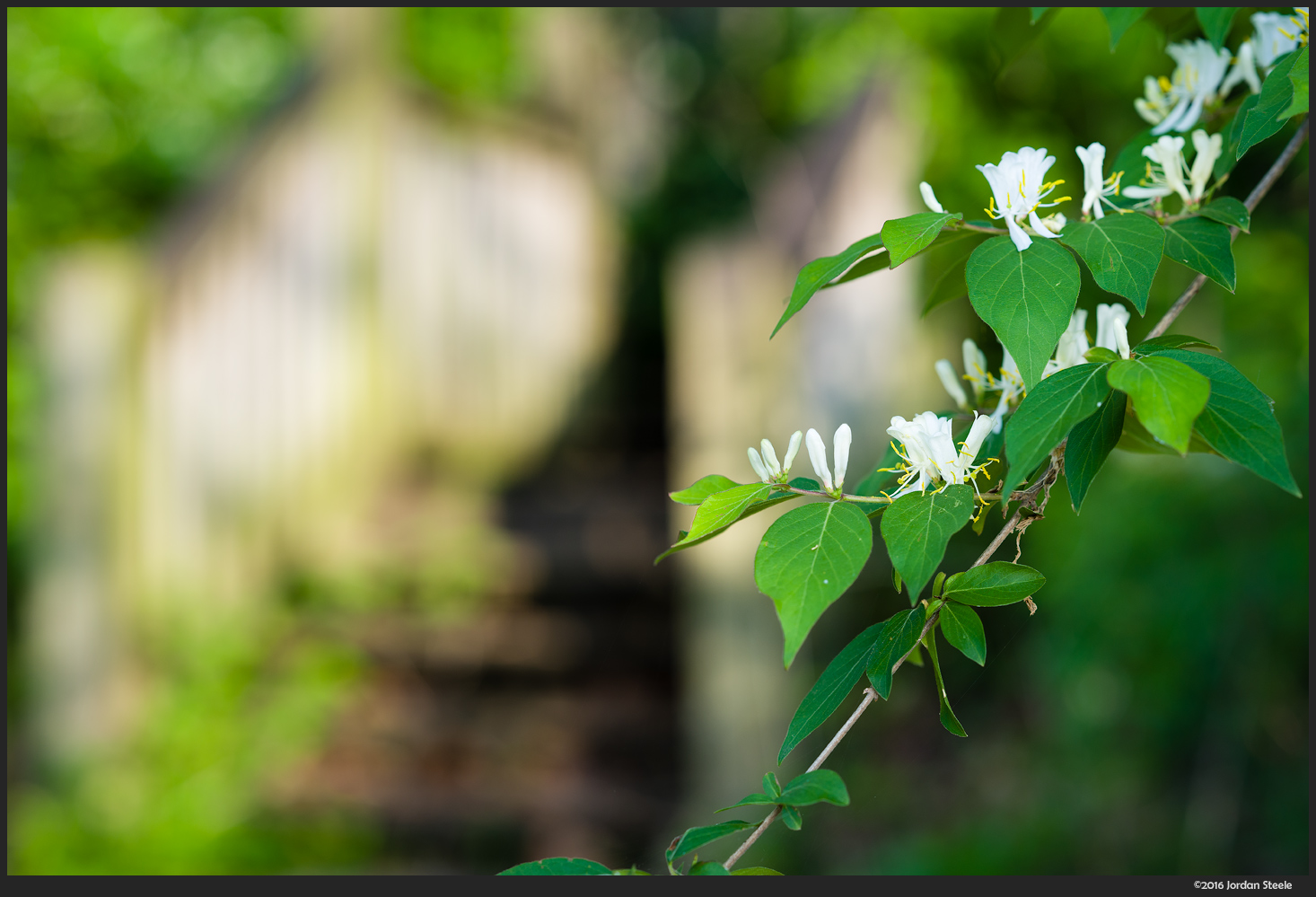 White Flowers - Sony A7 II with Sony 85mm f/1.4 GM @ f/3.5
