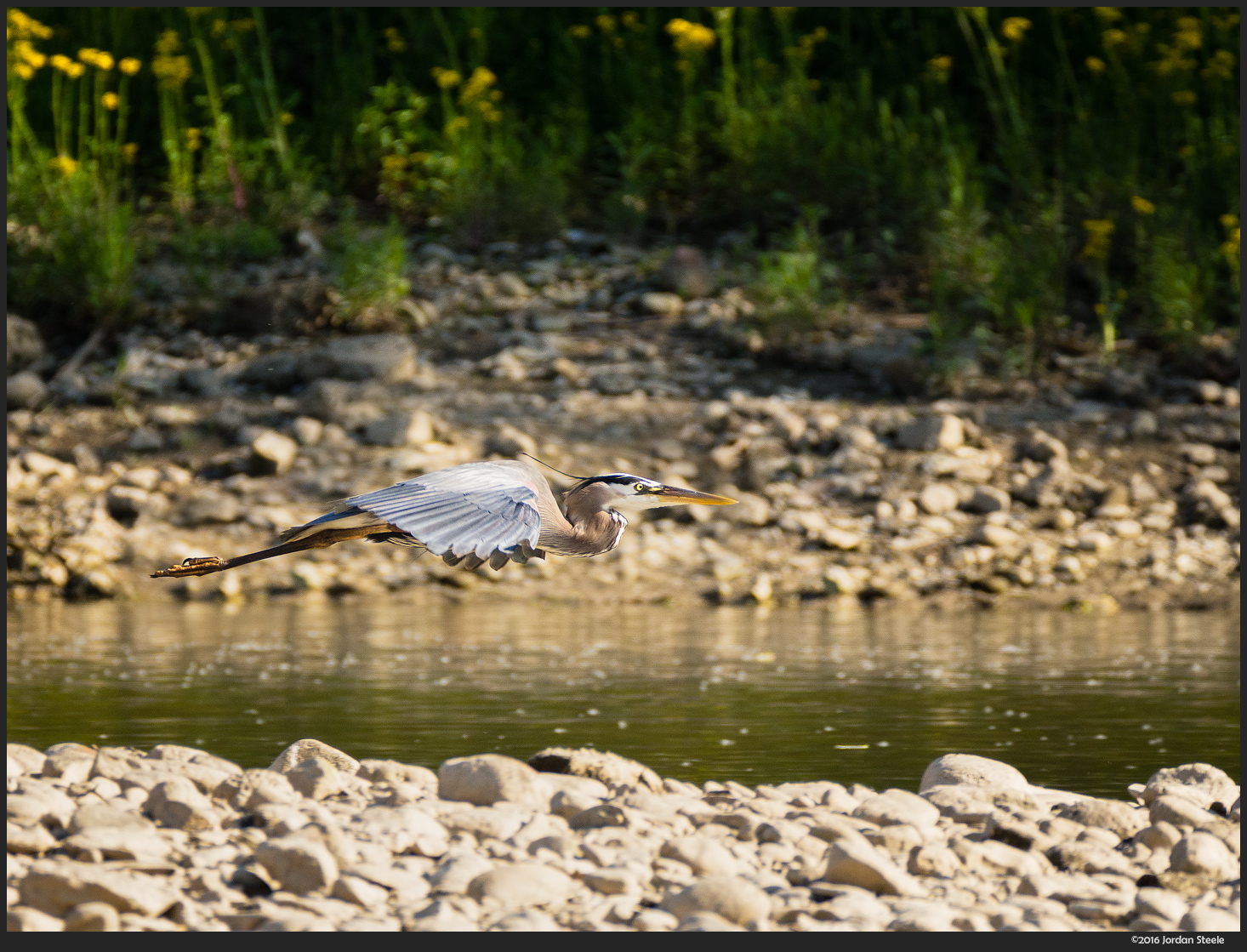 Great Blue Heron in Flight - Olympus OM-D E-M10 Mark II with Panasonic Leica 100-400mm f/4-6.3 @ 400mm, f/6.3