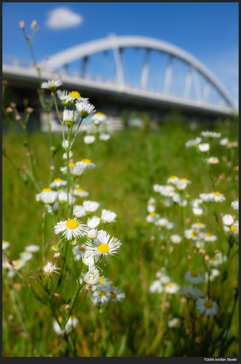 Main Street Flowers - Fujifilm X70 @ f/2.8, ISO 200