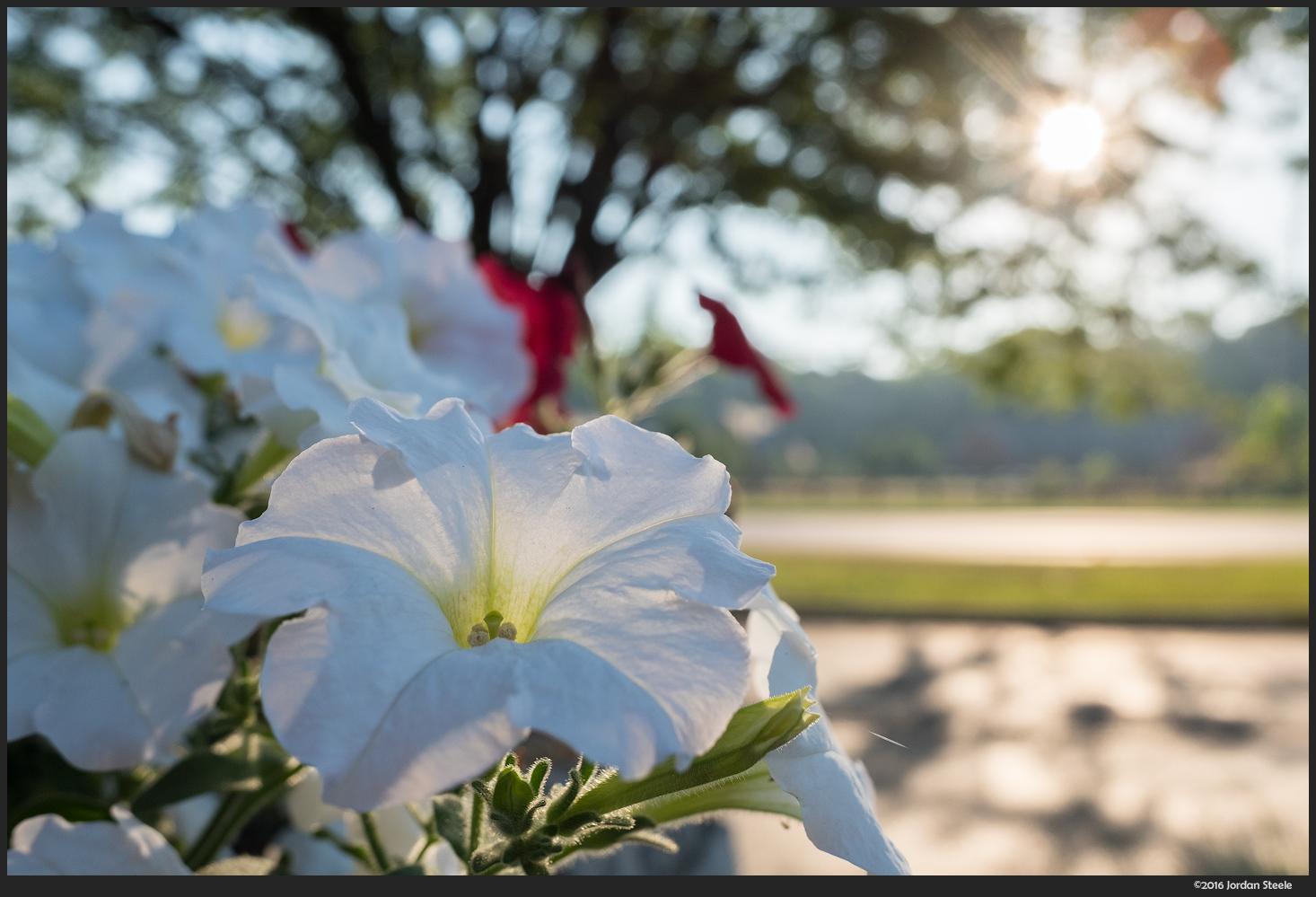 Flowers - Fujifilm X70 @ f/2.8, ISO 200