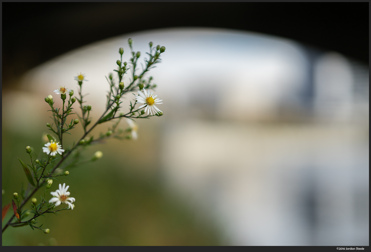 Flowers Under the Bridge - Sony A7 II with Zeiss FE 50mm f/1.4 @ f/1.4