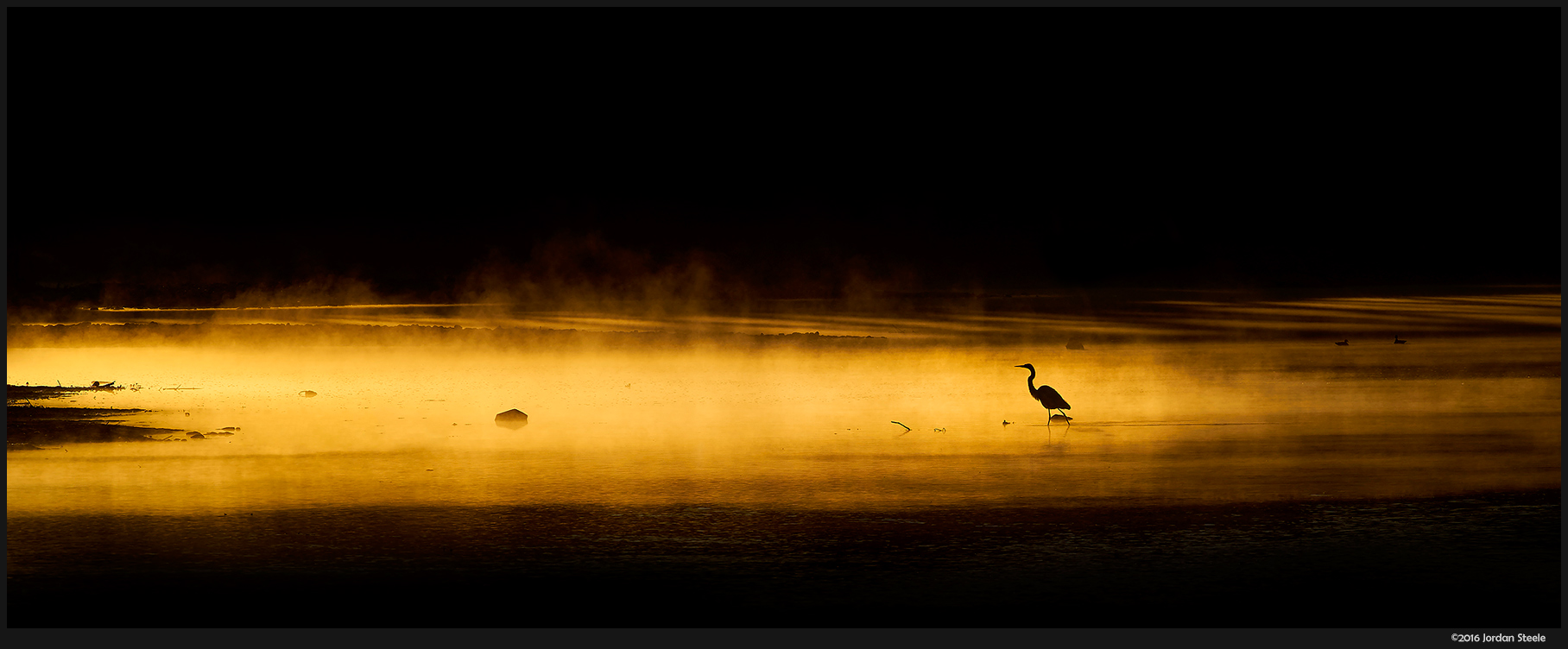 Egret in the Golden Mist - Sony A7 II with Canon EF 70-200mm f/4L + Kenko 1.4x TC @ 280mm, f/11