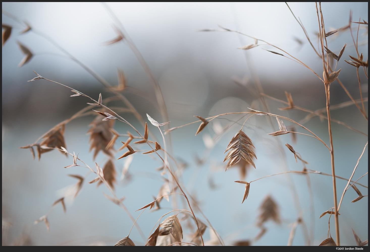Grass - Fujifilm X-T20 with Fujinon XF 50mm f/2 @ f/2