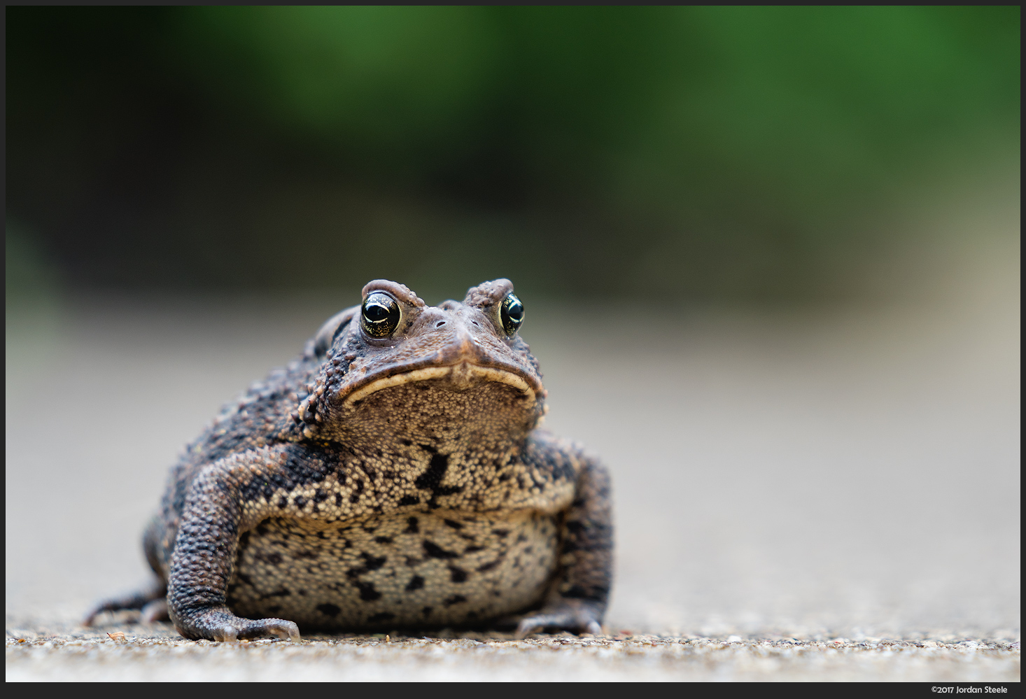 Toad - Sony A9 with Sony FE 70-200mm f/2.8 @