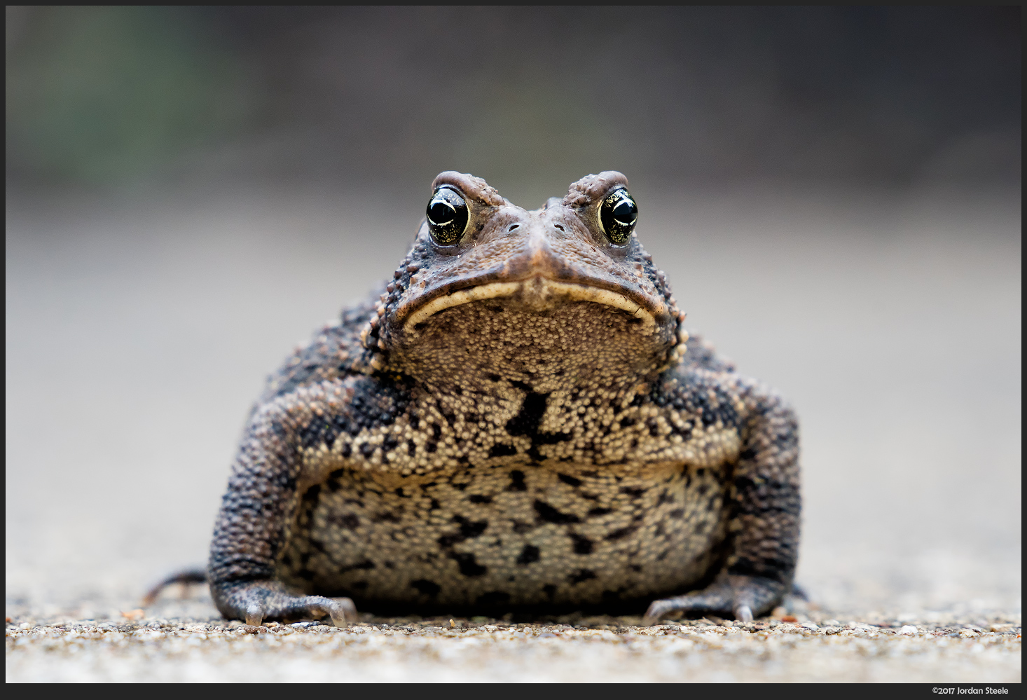 Toad - Sony A9 with FE 70-200mm f/2.8 GM + 1.4x TC @