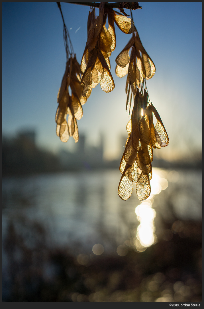 Sunlit Seeds - Sony A7 II with Voigtländer 35mm f/1.4 Nokton Classic @