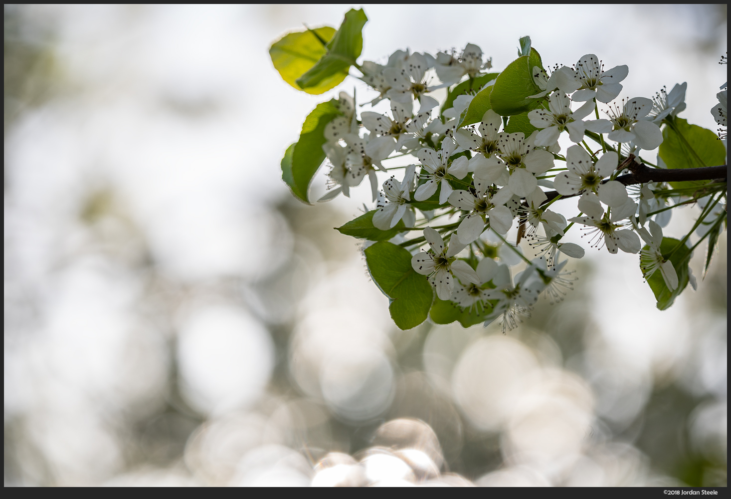 Blossoms - Sony A7 III with Sigma 100-400mm f/5-6.3 @